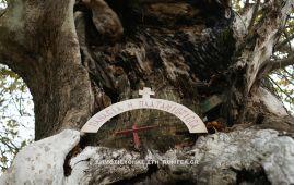 Κάτοικοι και περαστικοί συντηρούν ένα εκκλησάκι της Παναγίας μέσα σε κουφάλα πλατάνου